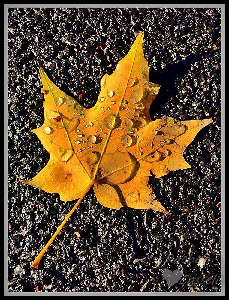 Photo in Random #fall