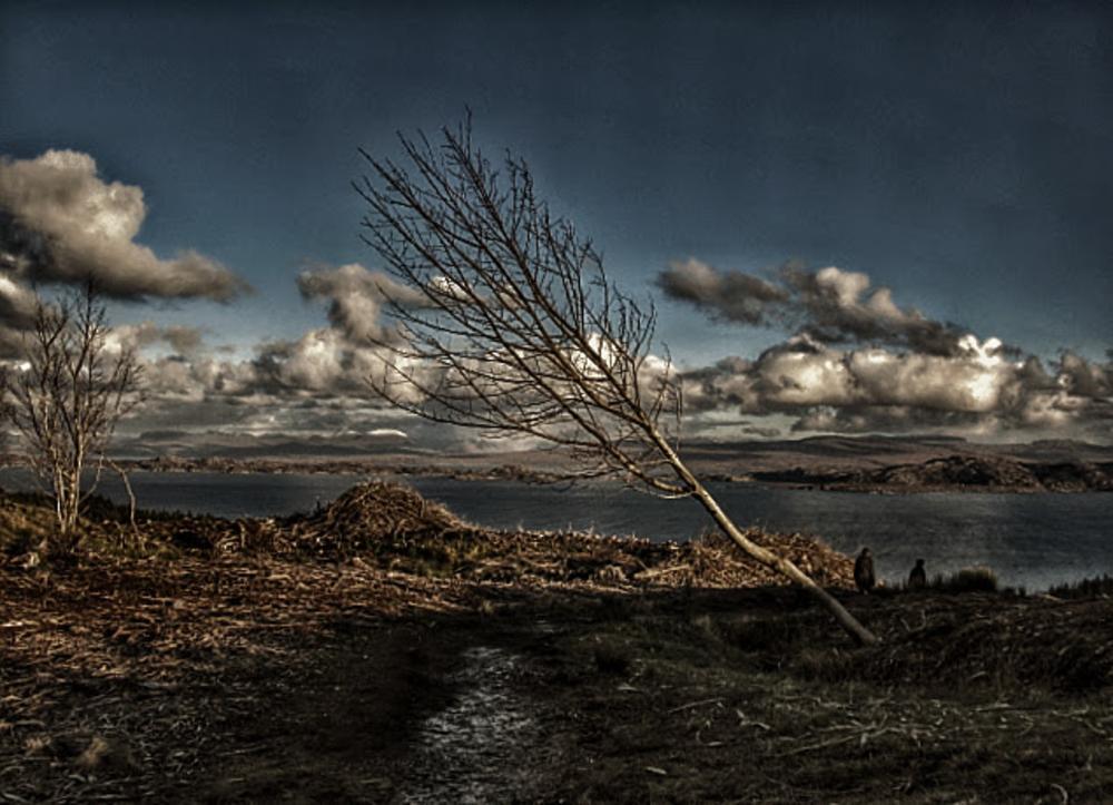Photo in Landscape #tree #barren #scotland #old man of storr #skies #loch #mountain #hill #footpaths #walkers #hikers
