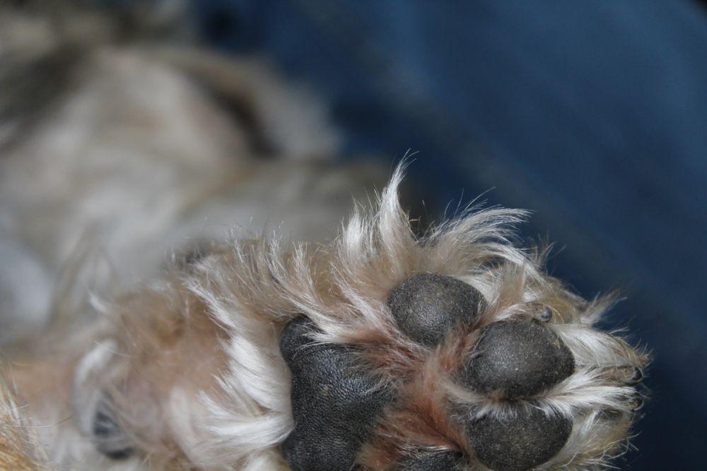 Photo in Animal #animal #paw #surrey