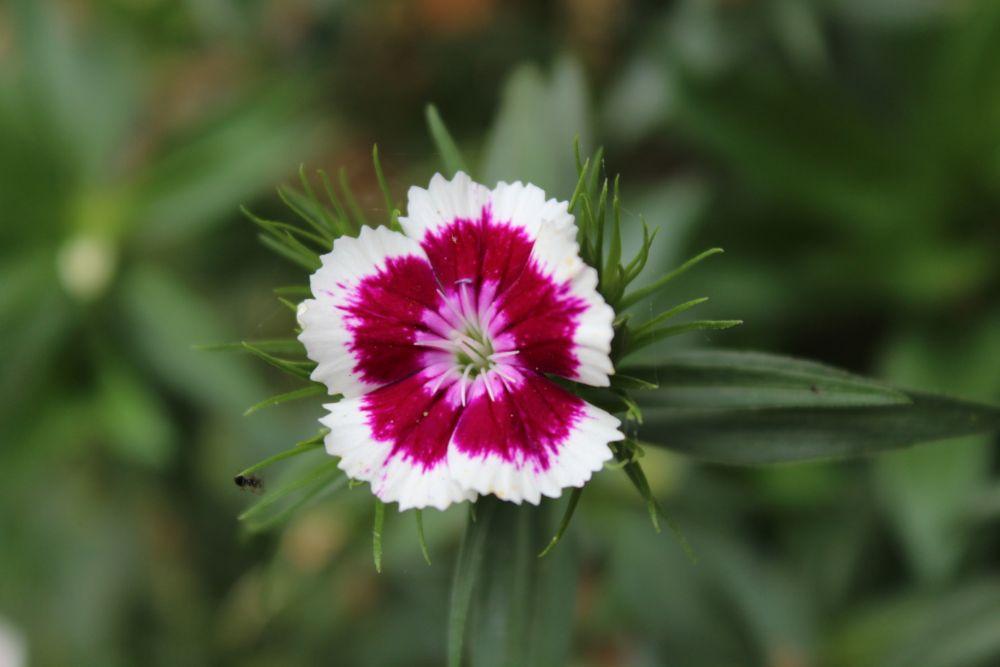 Photo in Nature #flower #garden #nature