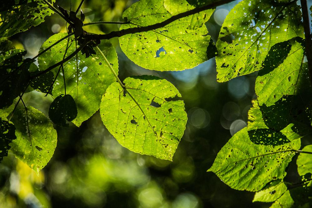 Photo in Abstract #nature #summer #leaves #shade #shadow