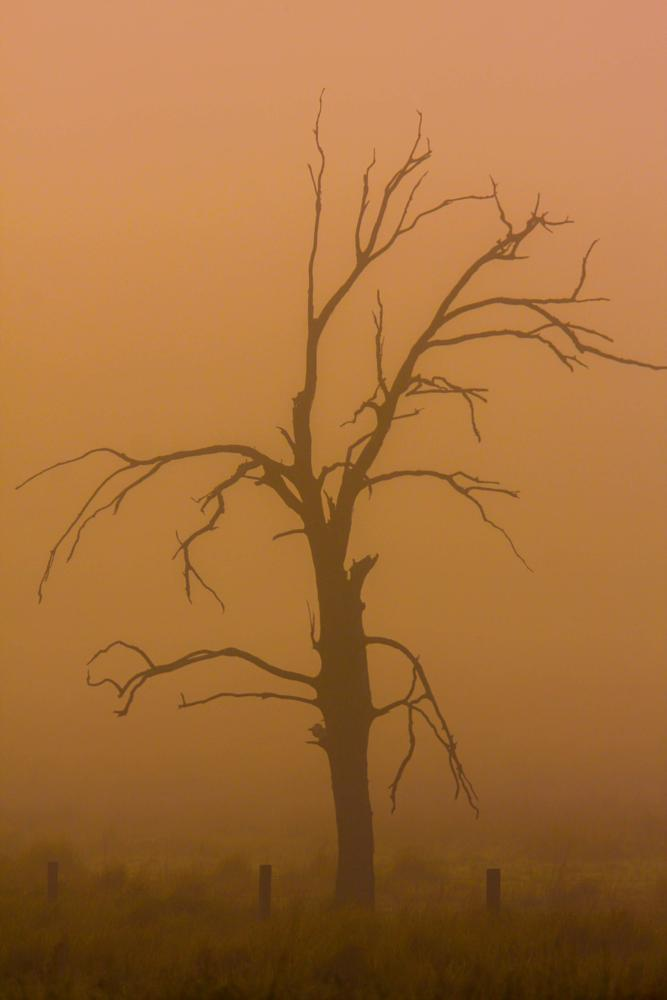 Photo in Nature #mist #tree #gohstly #creepy #dead #shadow
