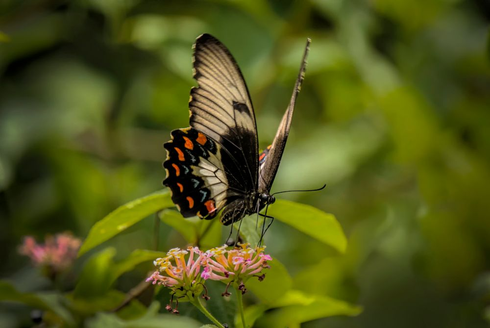 Photo in Nature #insect #butterfly #animal #random #none #macro
