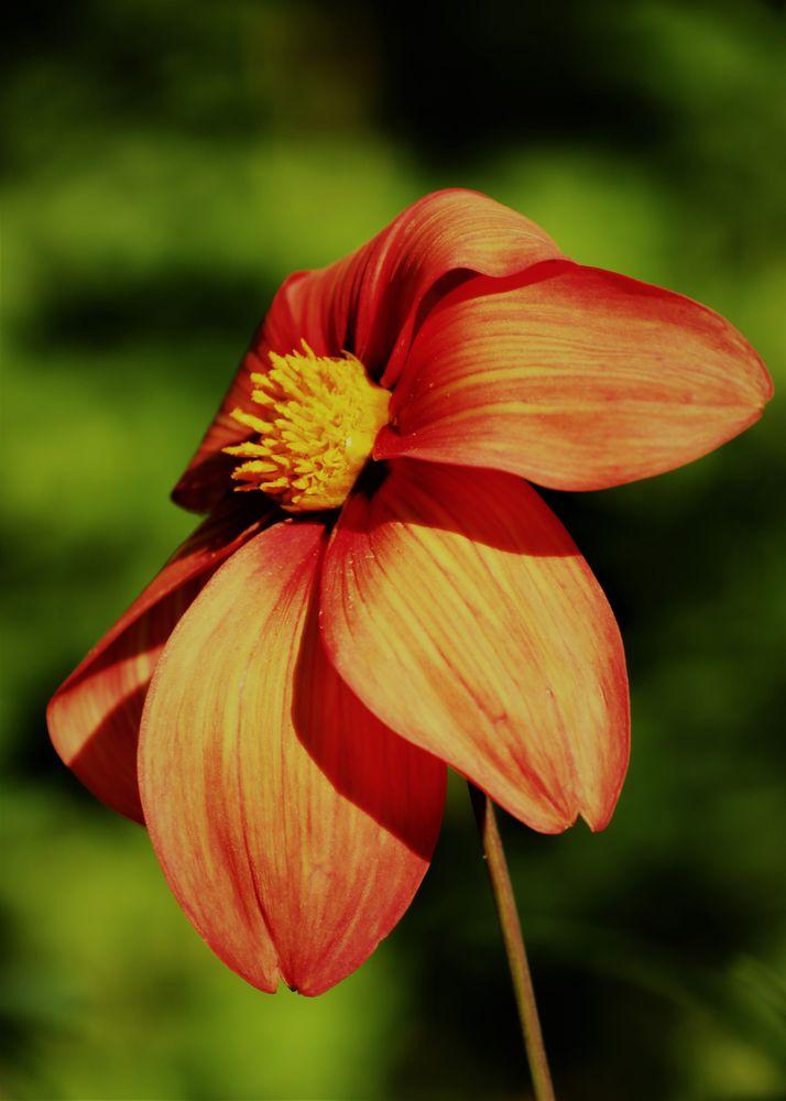 Photo in Nature #nature #flower #bloom #sunlight