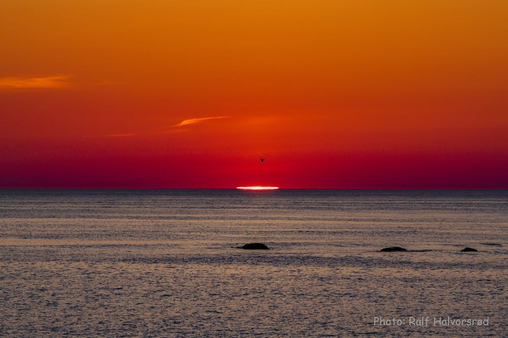 Photo in Landscape #sunset #red #red #big red sun #color #water #bird #ocean landscape #norway