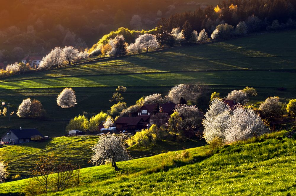 Photo in Landscape #spring #trees #blossom #green #grass #evening #hills