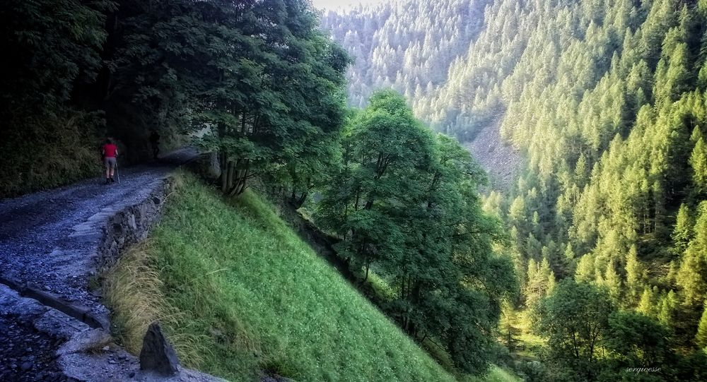 Photo in Nature #nature #trees #green #forest
