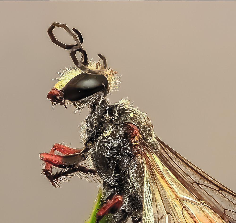 Photo in Random #macro #bee #detail #nature #amazing