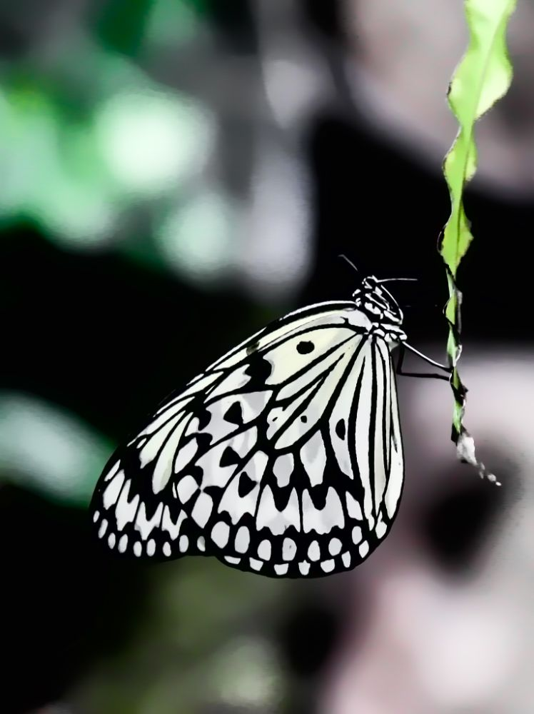 Photo in Animal #butterfly #insects #nature