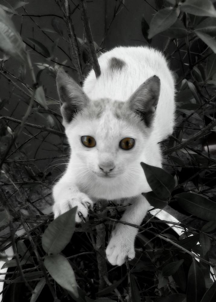 Photo in Black and White #cat #blackandwhite #random