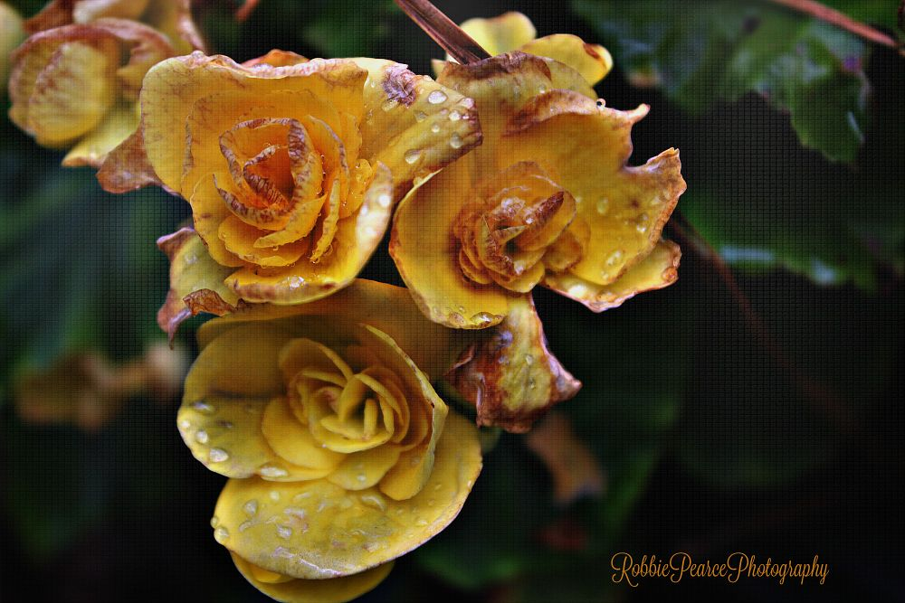 Photo in Nature #nature #flowers #water droplets #random #plants #yellow