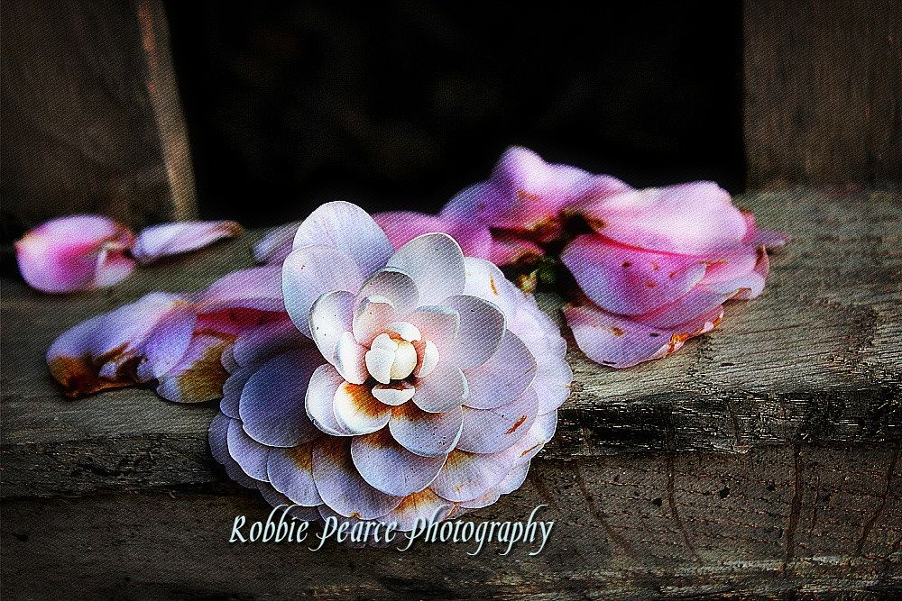 Photo in Nature #nature #random #pink #wooden bench #petals #white and pink #flower