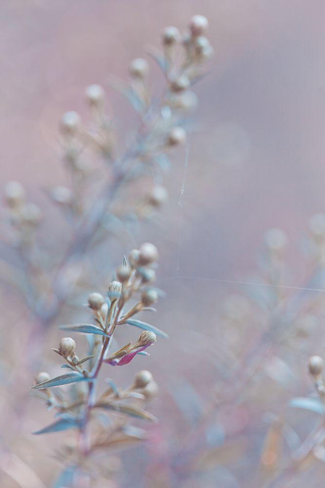 Photo in Nature #nature #flower #flowers #bokeh #light