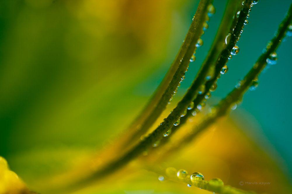 Photo in Macro #drops #water #drop #nature #flower #macro