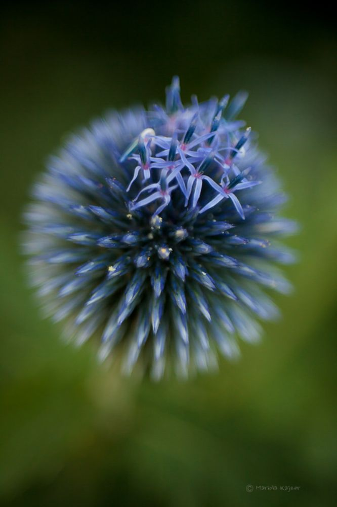 Photo in Macro #flower #close-up #nature #macro #color
