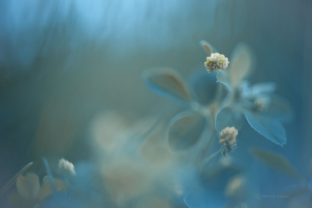 Photo in Nature #nature #flower #flowers #light #clode-up #macro