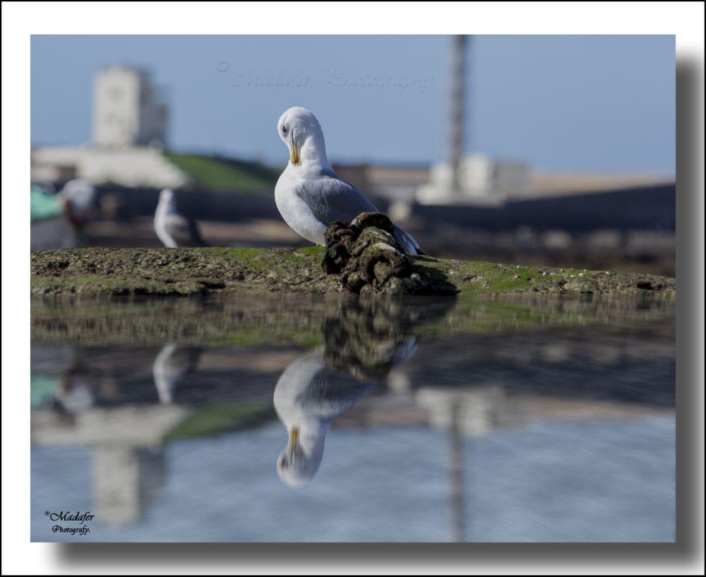 Photo in Landscape #ave #pajaro #gaviota #reflejo #color #costa #mar #sea #bokeh