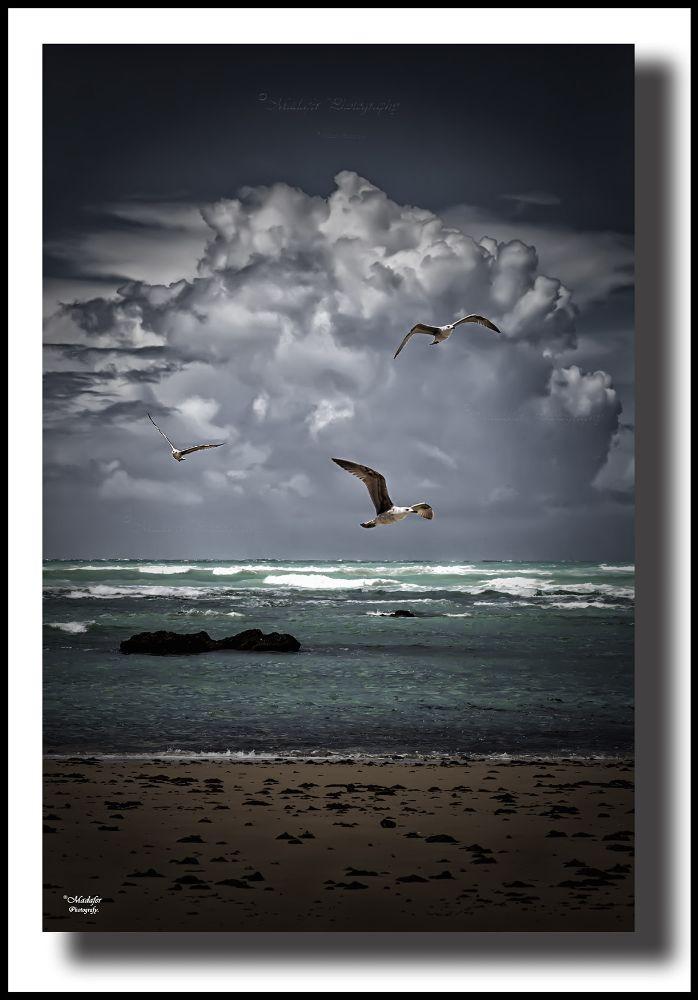 Photo in Landscape #gaviotas #pajaros #aves #mar #sea #playa #beach #cielo #clouds #nubes #sky #olas