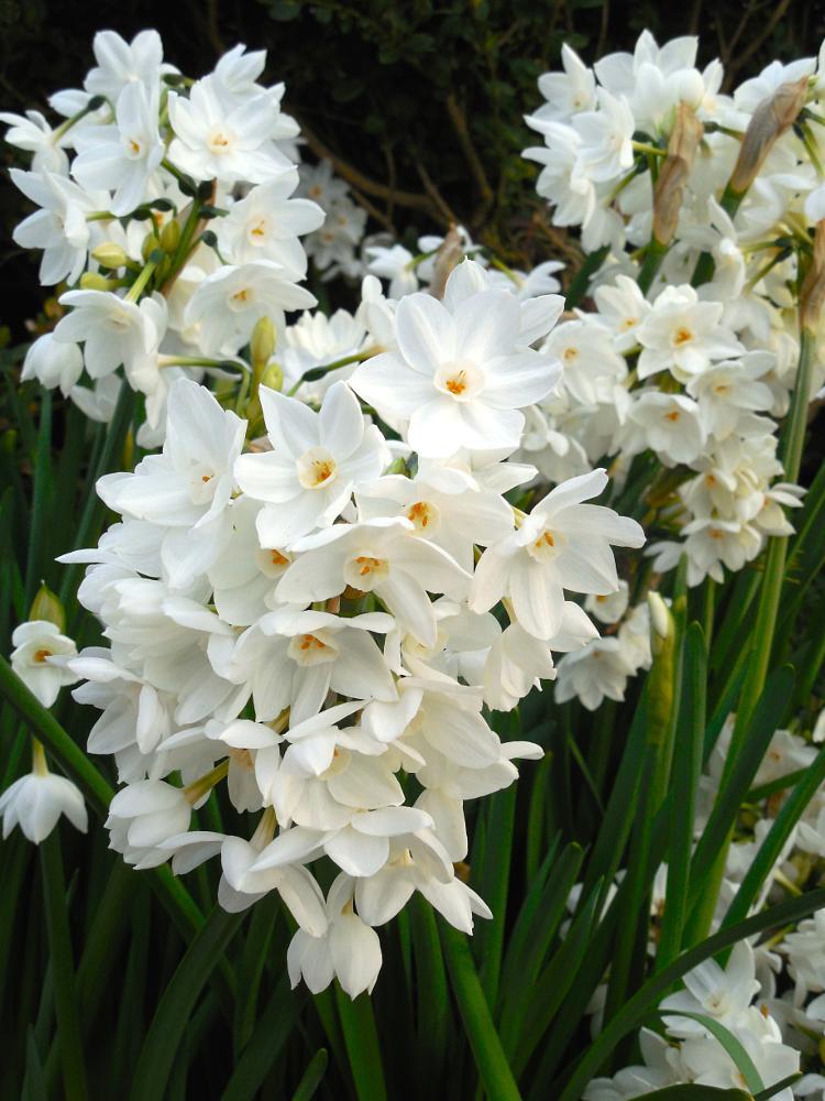 Photo in Macro #random #flowers #white #nature