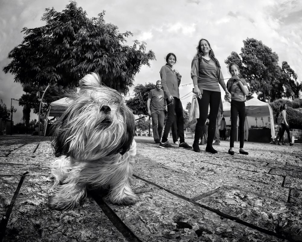 Photo in Street Photography #photomodel and her fans... #jaffa israel... #dog #genre photography #black and white #roman mordashev photography