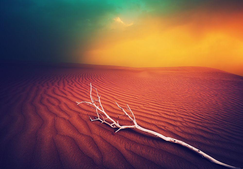 Photo in Fine Art #sunset #dust storm #sand storm #wood #sand #desert #dream