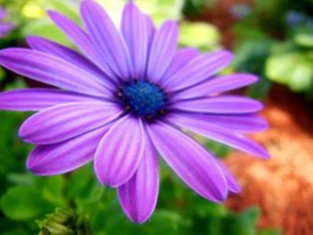 Photo in Still Life #purple #flower #nature #outside