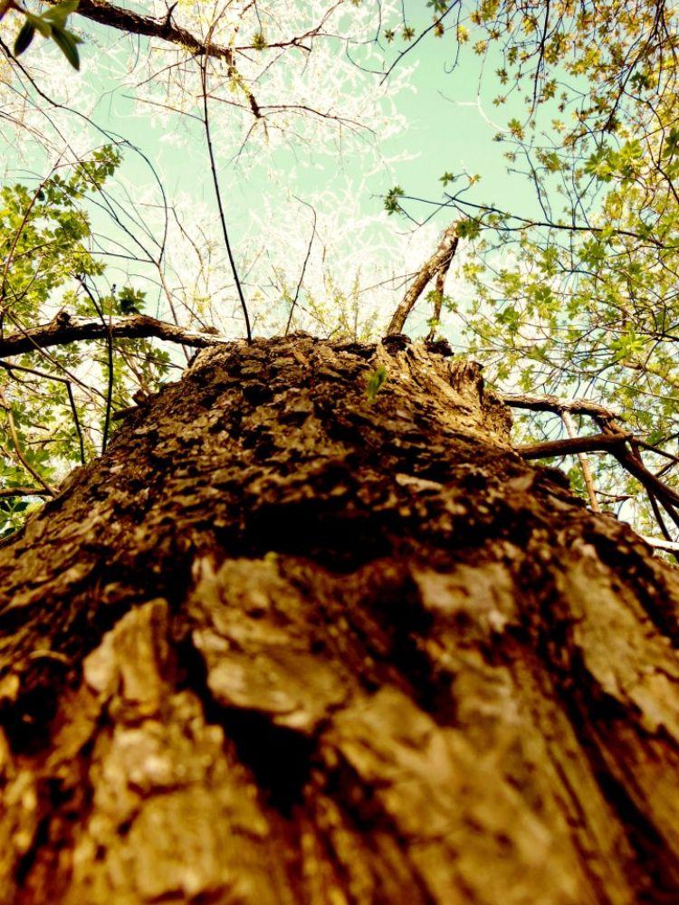 Photo in Landscape #tree #beautiful #outside #nature