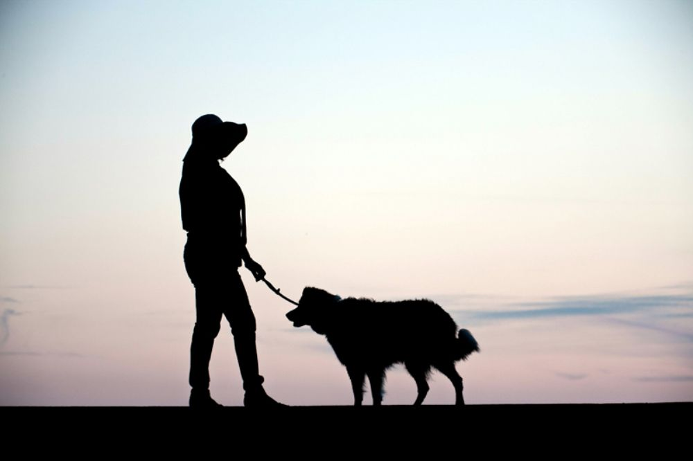 Photo in People #woman #dog #silhouette