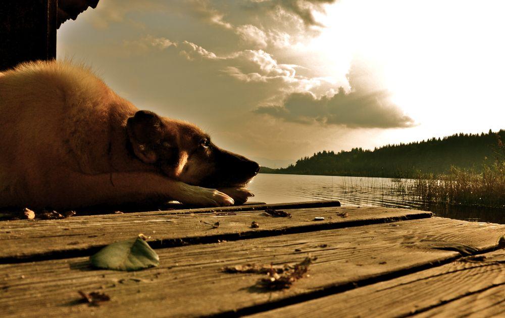 Photo in Animal #dogs #sun #lake #nature #bavaria #nikon