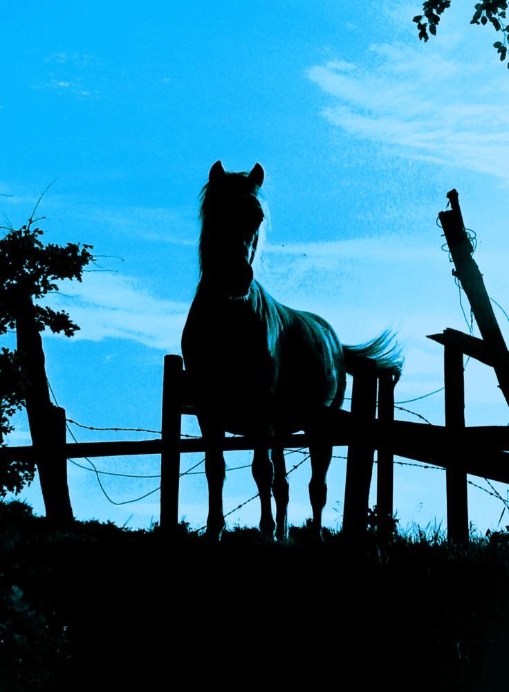 Photo in Animal #horse #blackbeauty #animal