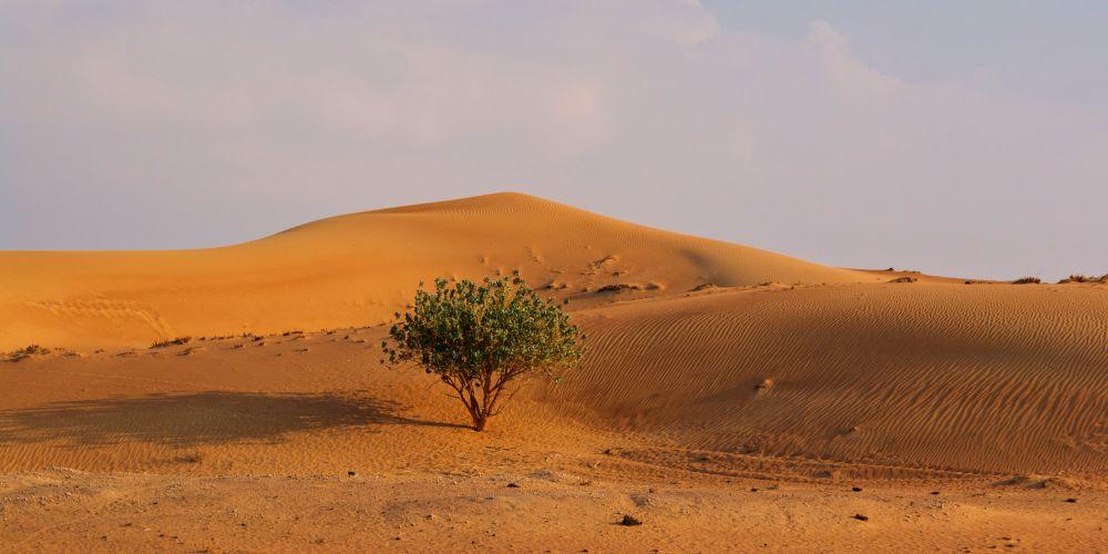 Photo in Landscape #desert #dunes #dubai #arabia #lone tree #sand dunes #uae #emirates