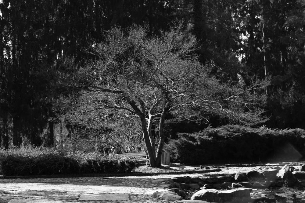 Photo in Black and White #vceraj