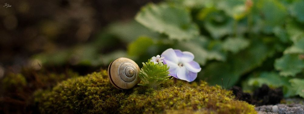 Photo in Nature #garden #flower #nature