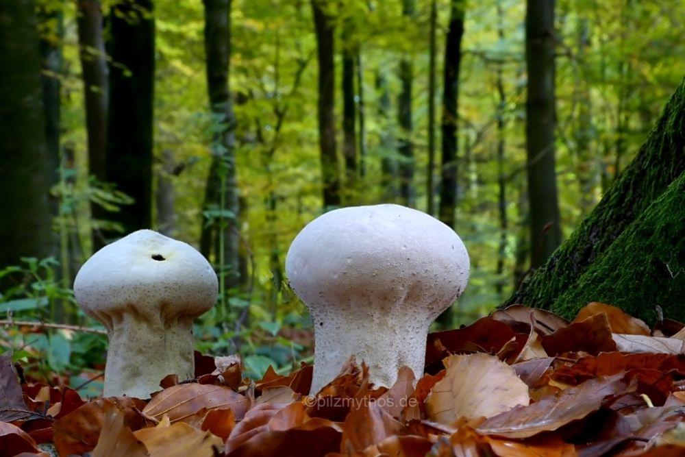 Photo in Nature #mushroom #pilze #makro #nature