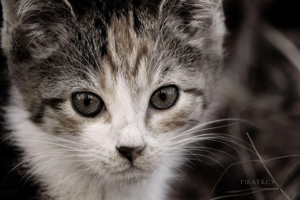Photo in Animal #animal #cats #naturel #turkey #pics