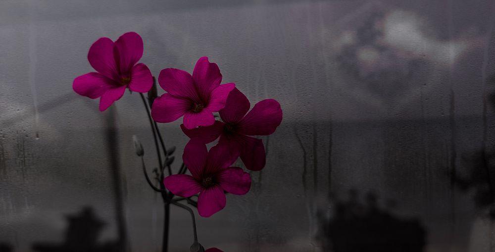 Photo in Fine Art #flower #flowers #youpic #photo #background #fine art
