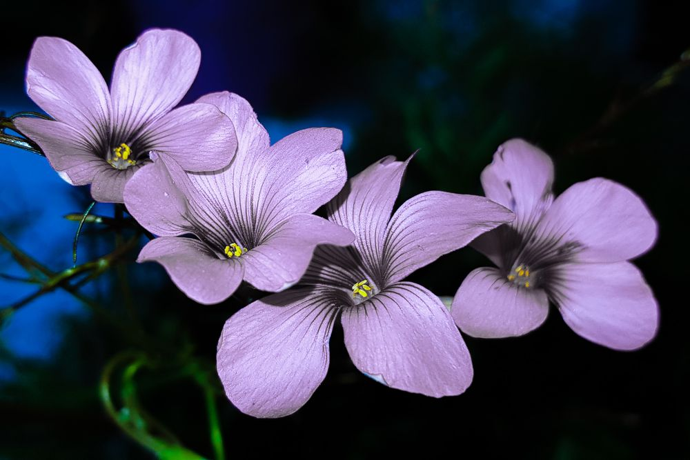 Photo in Nature #flower #flowers #garden #youpic #photo #background #screen