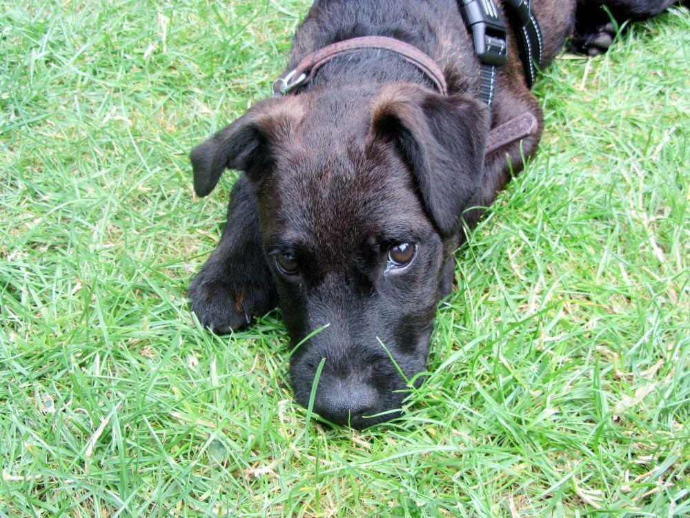 Photo in Animal #dog #puppy #cute