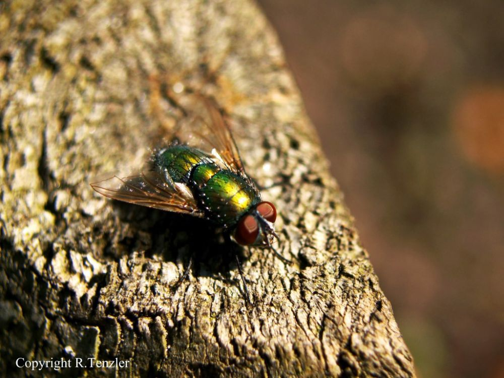 Photo in Animal #nature #green #fly