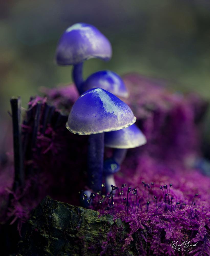 Photo in Random #mushroom #arty mushroom