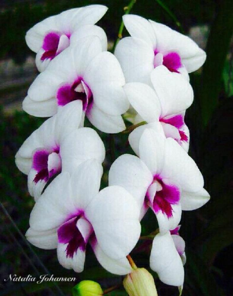 Photo in Nature #orchids thailand flower