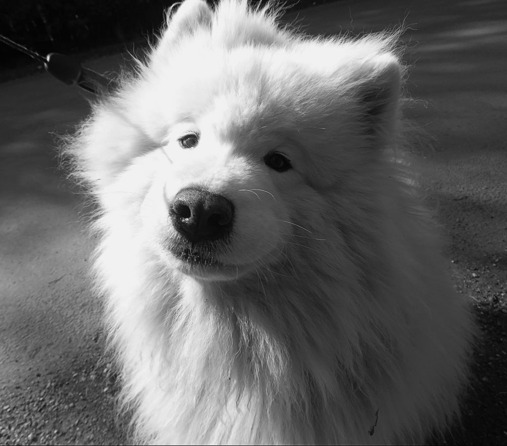 Photo in Black and White #dog