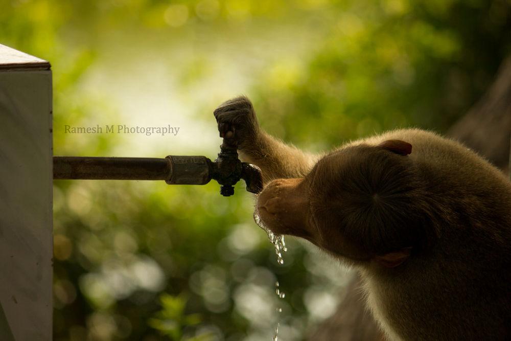 Photo in Animal #animal #chennai #wildlife photography #indian wildlife photography #indian nature photography #vedanthangal chennai