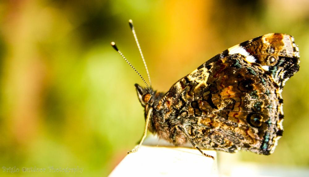 Photo in Animal #macro #butterfly #animal #nature