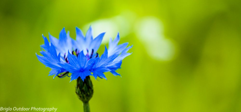 Photo in Nature #blue #flower #nature #close-up