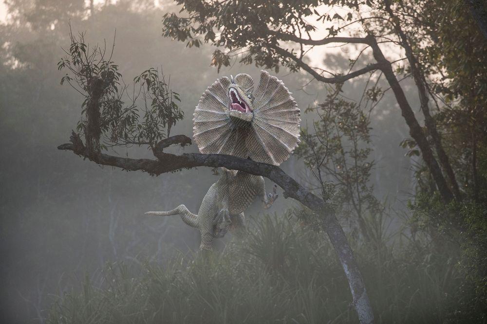 Photo in Animal #dinosaurs
