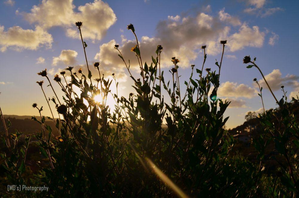 Photo in Nature #silhouette #flower #sunny #sunrays #sunlight #evening #poway #california #landscape