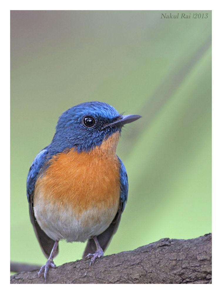 Photo in Animal #birds #nature #wildlife #beauty