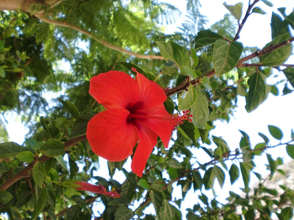 Photo in Nature #flower #plant #nature