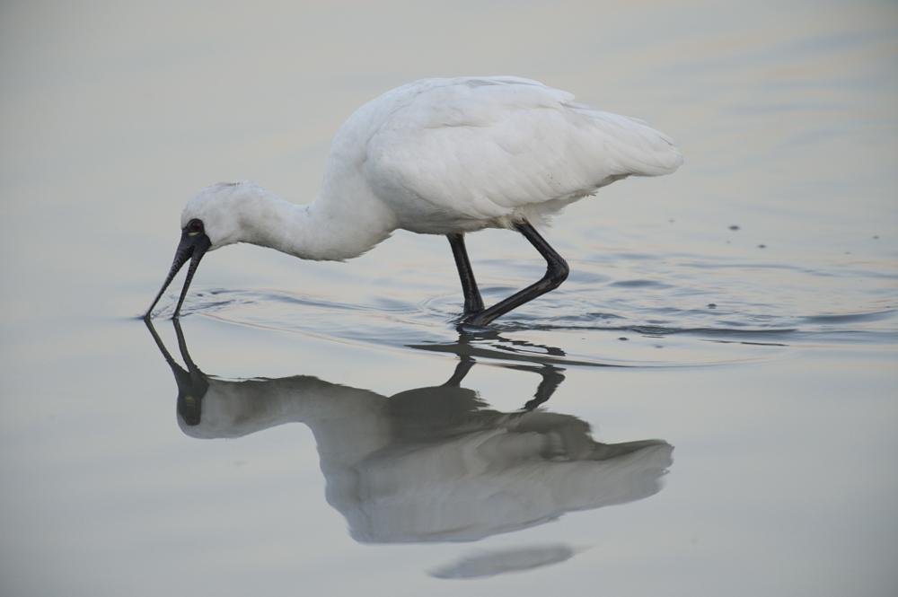 Photo in Animal #bird #nature